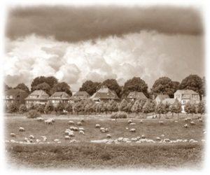 Schafe an der Dömitzer Wallstraße